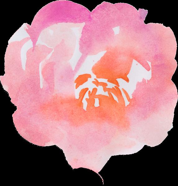 božur-peony-orbis