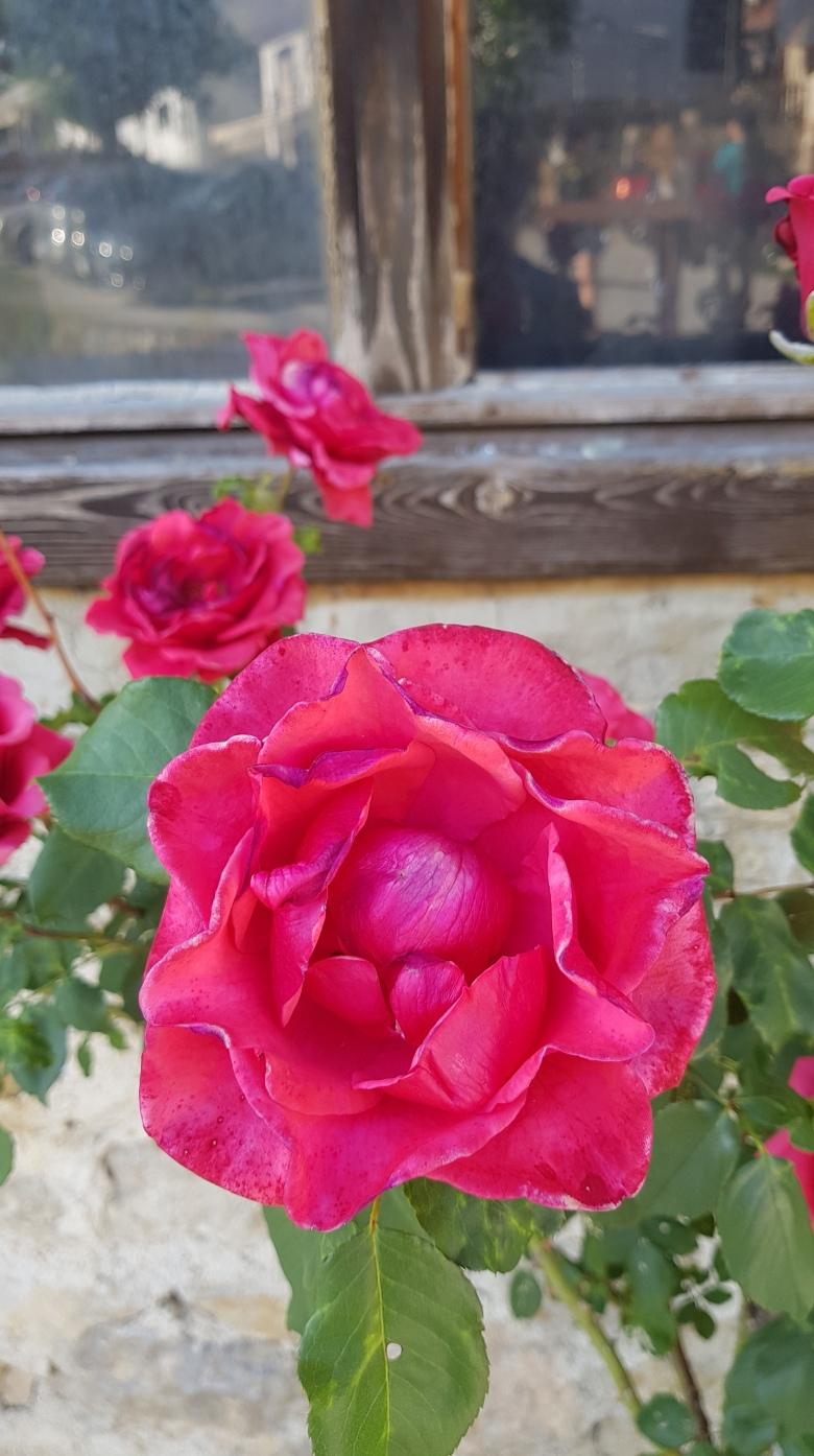 ruža-kamera-rastoke-s8