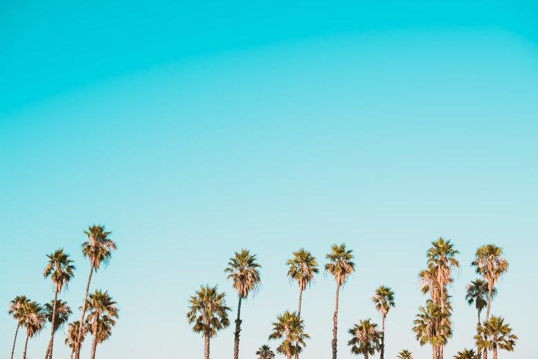 palma-odmor