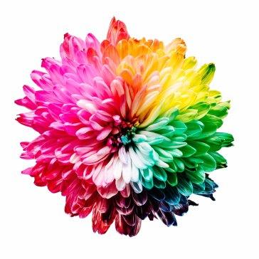 cvijet-boje-brendiranje-orbis