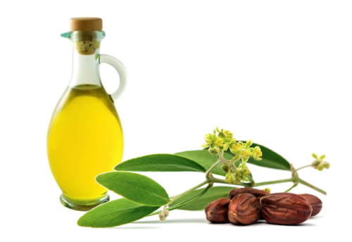 ulje-jojobe-kozmetika-ljepota